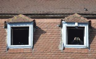Des fenêtres.