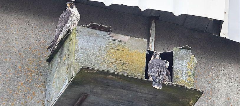 Un couple s'est approprié un nichoir installé à Bassens par la LPO.