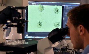 Un ingénieur de laboratoire contrôle au microscope la qualité de l'impression de cellules dans le laboratoire de Poietis à Pessac le 22 janvier 2016