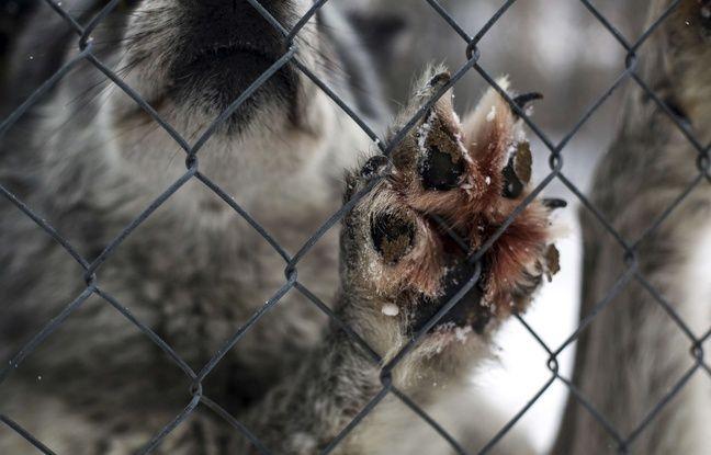 Des chiens sauvés du festival de la viande de chien en Chine proposés à l'adoption en France