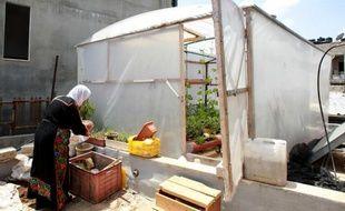Une Palestinienne du camp de Dheicheh près de Bethléem en Territoires palestiniens cultive son jardin sur le toit, le 12 mai 2015
