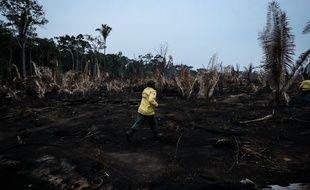 Une zone de l'Amazonie victime de la déforestation.