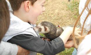 L'association toulousaine Câlinsoins propose de la zoothérapie.