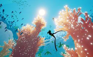 Un seul but, nager dans les fonds marins à la découverte des 200 formes de vie qui les peuplent.