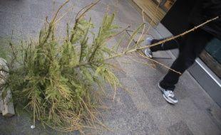 Le sapins de Noël se retrouvent sur la voirie après les fêtes. 3/01/2011 Toulouse
