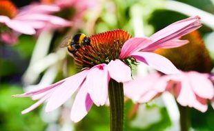 Les fleurs ont beaucoup inspiré le petit Matteo (illustration).