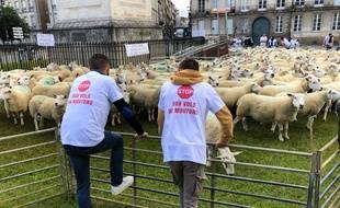 Des éleveurs de moutons en colère, le 17 juin 2020 à Nantes.