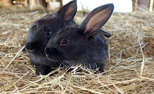 L'association L214 dénonce les conditions d'élevage des lapins en cage.