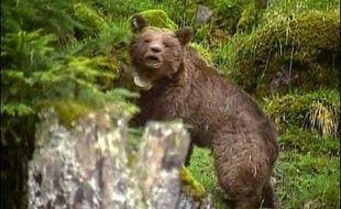 L'ourse slovène Franska, lâchée dans les Pyrénées en 2006 avec quatre autres plantigrades de même origine, a attaqué à plusieurs reprises les troupeaux, tuant près de 150 brebis, au grand dam des éleveurs, qui demandent sa capture et son retrait de la région.