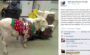 Capture d'écran du profil Facebook de la Nebraska Humane Society de Gage le mouton errant.