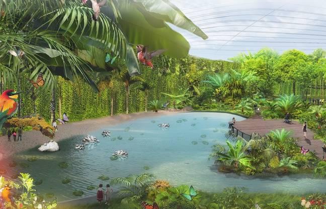 Projet de l'intérieur de Tropicalia.