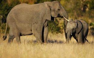 Un éléphant et un petit dans le parc national Kruger, en Afrique du Sud, le 22 juin 2010