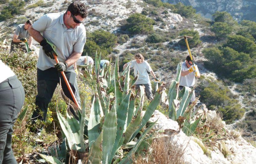 Marseille : Arracher les plantes envahissantes dans les calanques, une solution efficace pour la biodiversité ?