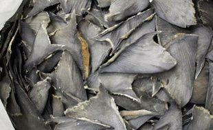 La découpe des ailerons de requins va être totalement interdite au sein de l'Union européenne, en vertu d'une décision des Etats membres mettant fin à une pratique qui perdurait en raison d'une dérogation juridique.