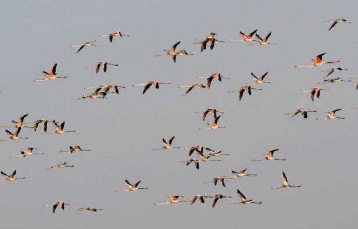 La migration annuelle des flamants peut être lointaine. – Sam Panthaky afp.com