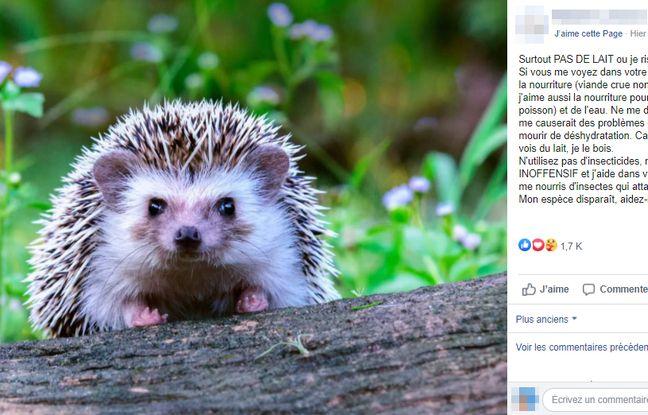 Sur Facebook, la publication, accompagnée d'une photo de hérisson, est beaucoup relayée.