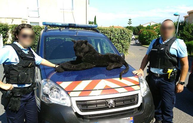 Perpignan : Les gendarmes sont appelés pour maîtriser une panthère en liberté, c'était une peluche