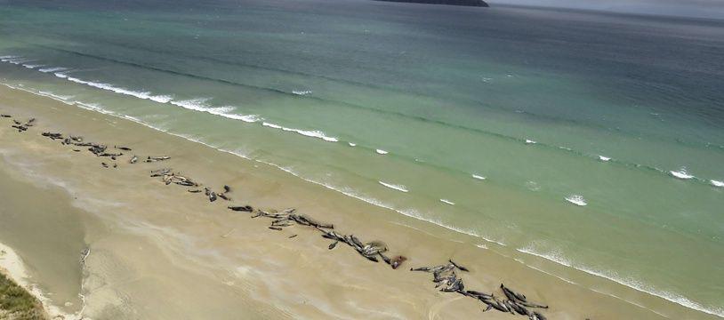 Une scène similaire s'était passée sur une plage de l'île Stewart, en Nouvelle-Zélande, le 25 novembre 2018.