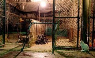 Plusieurs villes de l'est de la Chine ont interdit le commerce des volailles vivantes ou ont abattu des oiseaux pour lutter contre le virus de la grippe aviaire H7N9, qui a fait six morts sur 16 personnes infectées.