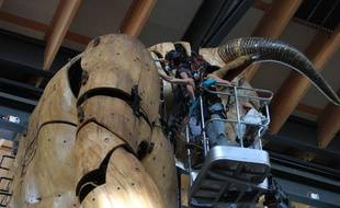 Le Minotaure a été soigné durant une semaine au sein de la Halle de la Machine.
