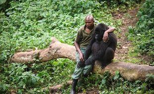 Un garde forestier avec un gorille dans le parc national de Virunga, en République démocratique du Congo, le 17 juillet 2012.