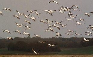 Des grues cendrées migrent dans l'Est de la France.