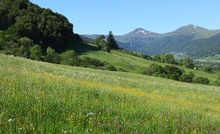 Une prairie dans le Cantal.