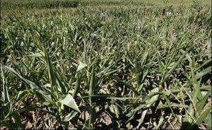 Un éleveur-agriculteur du Lot ayant semé du maïs transgénique s'est suicidé en se pendant à un arbre dans son champ de Girac, près de Bretenoux, où des manifestants anti-OGM avaient prévu d'organiser dimanche un pique-nique anti-OGM, a-t-on appris de source judiciaire.