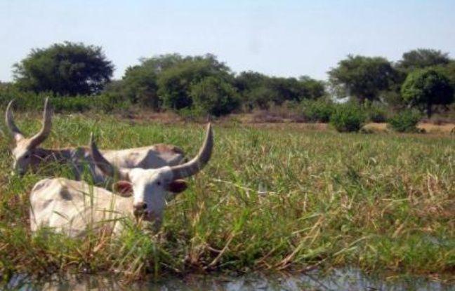 """""""Le lac Tchad est en train de disparaître"""", affirme Abdoulaye Tcharimi, agent du ministère de l'Environnement, qui est né et travaille à Bol, la principale ville sur les bords du lac Tchad, dont la taille a été divisée par dix en 50 ans, selon certains experts."""