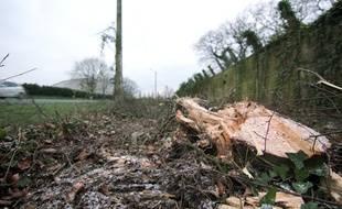 A Vern-sur-Seiche, près de Rennes, 300 arbres ont été abattus autour du site pétrolier de Total.