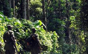 Des rangers du service de protection de la nature ougandaise dans la forêt Impénétrable de Biwindi, en Ouganda, à la frontière avec le Rwanda et la République démocratique du Congo, en septembre 2009. (Photo illustration)