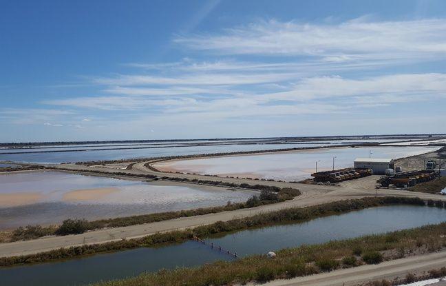L'eau salée va passer par cinq bassins avant que le taux de salinité soit à son maximum, aux Salins du midi