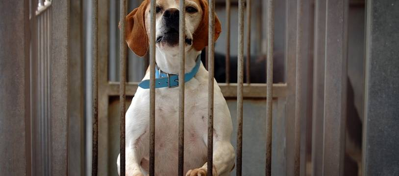 Un chien dans un refuge. (illustration)