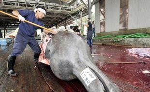 Des pêcheurs japonais découpent une baleine à Wada le 25 juin 2008
