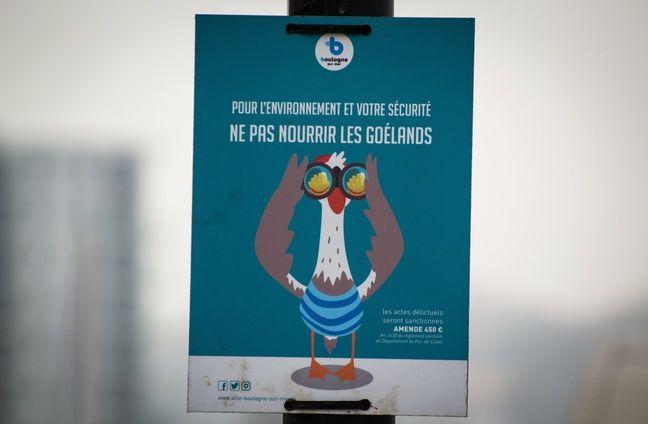 La municipalité a déployé des panneaux sur la promenade entre les aubettes à poissons et Nausicaa pour rappeler qu'il ne faut pas nourrir les goélands.