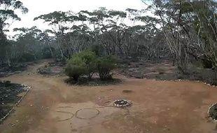 Une Australienne perdue depuis trois jours dans le bush a été retrouvée mercredi grâce à un