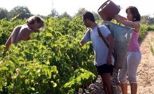 """Les vendanges 2012 en France risquent d'être les plus mauvaises en volume depuis plus de vingt ans, avec une récolte de raisins """"exceptionnellement basse"""" du fait de la météo exécrable du printemps, mais le millésime s'annonce """"prometteur""""."""