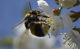 Les insecticides épandus représentent un danger pour les abeilles.