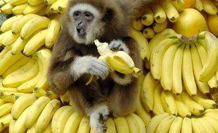 Photo d'illustration. Un singe en Corée-du-Sud, en avril 2007.