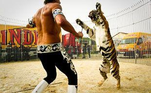 """Frédéric Edelstein, dresseur de fauves du cirque Pinder """"joue"""" avec un tigre au cirque Pinder, Lyon, le 9 avril 2012. CYRIL VILLEMAIN/20 MINUTES"""