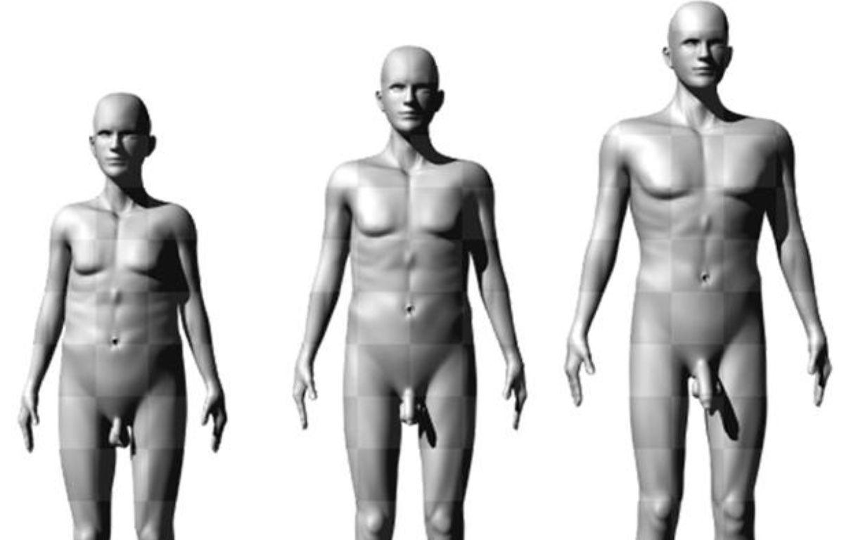 Les silhouettes présentées à des femmes par des scientifiques australiens pour évaluer leur attrait sexuel. – DR