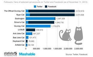 Statistique des chats préférés sur Internet par Statista et Mashable.