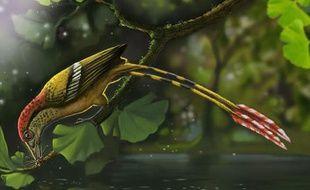 Les chercheurs viennent le 2 juin 2015, de percer le mystère d'un  oiseau âgé de 115 million d'années, fossilisé avec ses plumes et en trois dimensions découvert en 2011 au Brésil