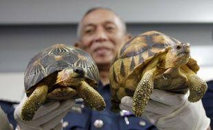Les douanes malaisiennes ont annoncé lundi 15 mai 2017 avoir déjoué une tentative pour faire rentrer en Malaisie en provenance de Madagascar les tortues les plus menacées du monde.