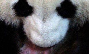 Une femelle panda géant, qui avait déjà donné naissance à des jumeaux il y a trois ans au zoo de Madrid, a mis au monde un autre bébé vendredi, a annoncé le zoo.
