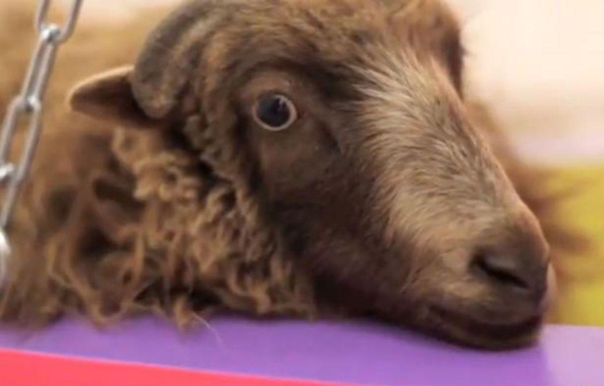 Des étudiants d'art berlinois menacent de décapiter un mouton. – Capture Youtube