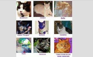 Les noms des victimes de Robert Roy Farmer : Angel, GoGo, Ichigo, Rayden, Thumper, Juniper, Babe, Traveller, Tiger, Beardsley, Chablis, Romeo. La dernière photo est celle du chat retrouvé dans la voiture.
