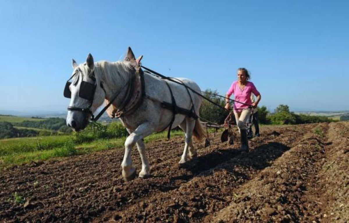 Quand la plupart des paysans sont juchés sur de puissants tracteurs, certains agriculteurs ont choisi de revenir à l'âne ou au cheval pour cultiver leurs champs. Loin d'être archaïque, disent-ils, la traction animale est un outil moderne et dans l'air du temps. – Remy Gabalda afp.com