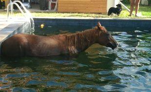 Le cheval a pu être sorti de la piscine par les pompiers des Hautes-Pyrénées.