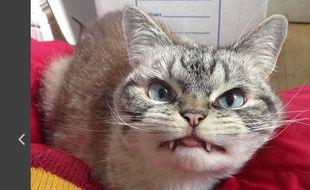 petite chatte vidéosxhamster films